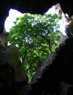 Cavetree