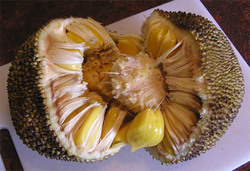 Jackfruit_inside_2